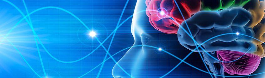 Illustrazioen 3d del cervello umano o reti neurali