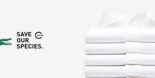 Coccodrillo Lacoste: Logo Lacoste e pila di 4 polo bianche Lacoste su sfondo bianco